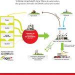 Focus | L'Ester Méthylique d'Huile Animale (EMHA), un biocarburant inscrit dans l'économie circulaire