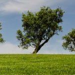 Matinale Orée «COP14, COP24, quels enjeux innovants pour le droit ?»